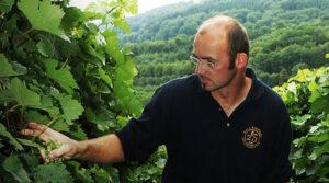 Weinbaugebiet Württemberg: Weingut Kistenmacher-Hengerer