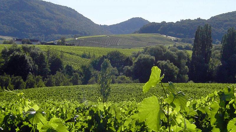 Weinanbaugebiet Pfalz: Weingut Becker