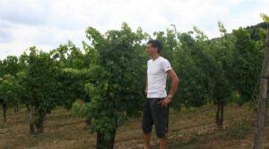 Weinanbaugebiet Mosel: Weingut Hubertus Reis